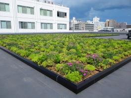 福岡支店本館屋上の緑化整備の様子②