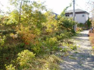 ふるさと緑地での清掃・除草作業中