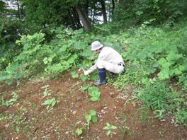 ふるさと緑地の除草の様子①