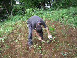 ふるさと緑地の除草の様子②