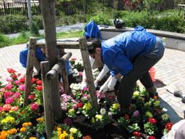 もりの丘公園での花植えの様子